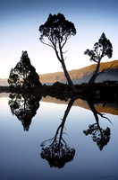 Tree silhouettes reflected in still water in Tasmania Australia by photographer Mieke Boynton